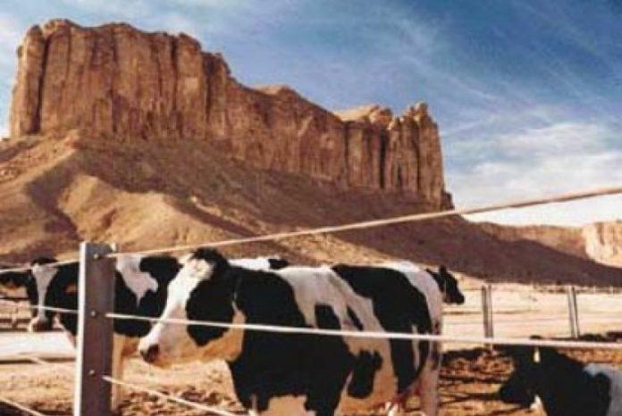 Hukum Memakan Janin Yang Mati dalam Perut Hewan yang Disembelih